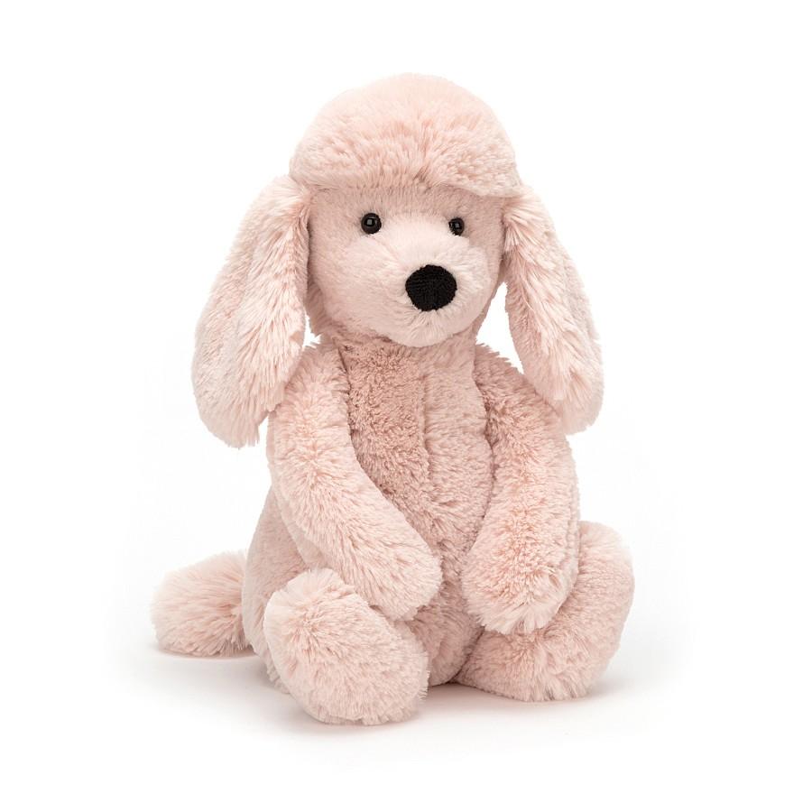Poodle Bashful